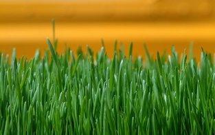 Fresh-cut-grass1
